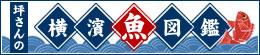 坪さんの横濱魚図鑑